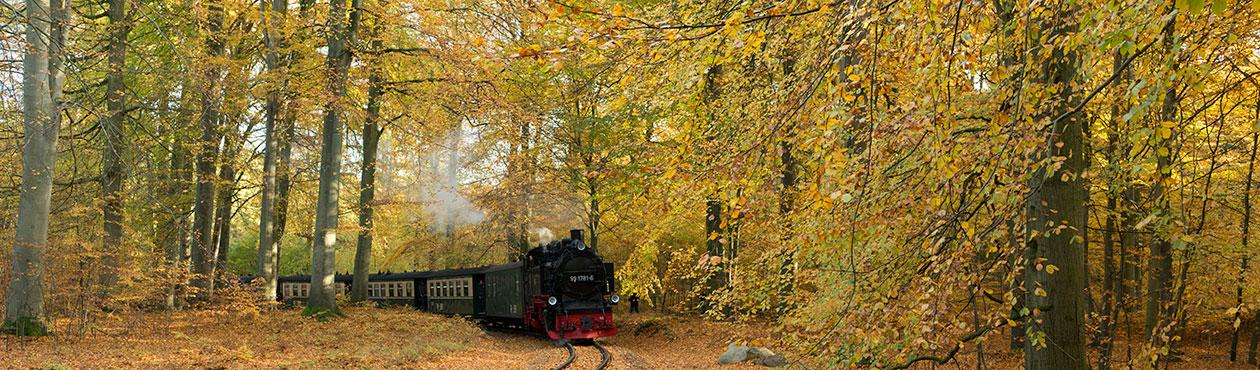 Rasender Roland Rügensche Bäderbahn Insel Rügen